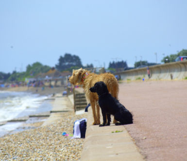 Two dogs on a pebbly beach looking out to sea