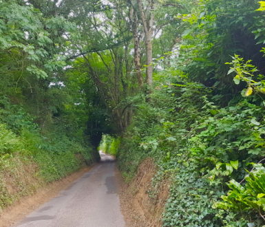 Road with very high sides and trees arching over it